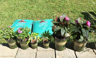 Planting Those Containers for Summer