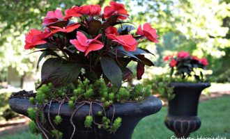 Beautiful Blooming Container Gardens!