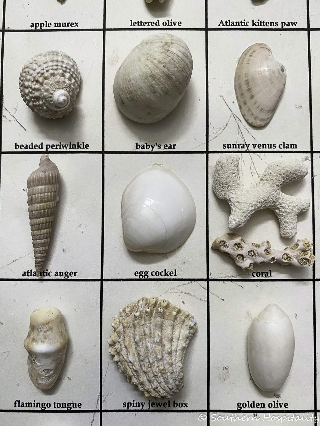 How to make a shell box